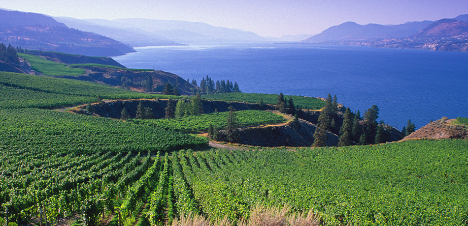View of Mission Hill Vineyard